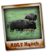 ADL 7 Hunting Ranch